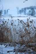 wintry landscape with pond
